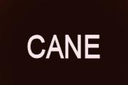 Cane on CBS