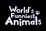 'World's Funniest Animals' Renewed For Season 2