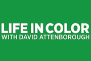 Life in Color with David Attenborough on Netflix
