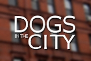 Dogs in the City on CBS